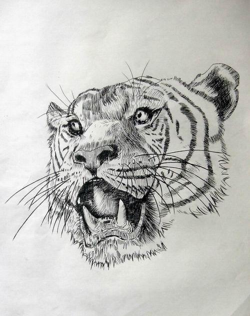 老虎头可爱简笔画