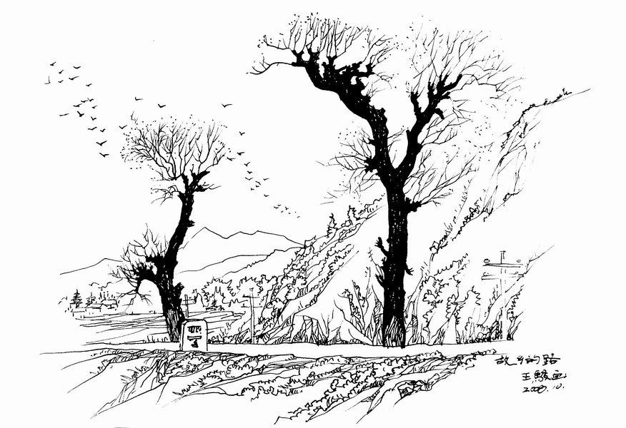 树钢笔画 钢笔画树速写,芭蕉树钢笔画图片